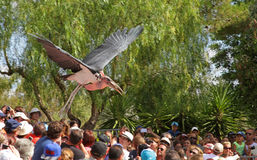 Выставка птиц на зоопарке Стоковое Изображение RF