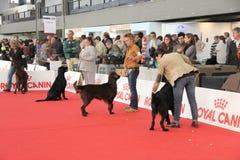 выставка собаки международная стоковое изображение