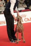 выставка собаки международная стоковая фотография
