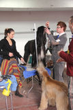выставка собаки международная стоковые фотографии rf