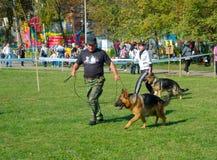 Выставка собаки Стоковое Фото
