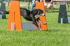 Выставка собак Стоковая Фотография