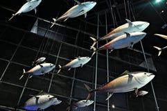 Выставка среднеземноморская-cosmocaixa Стоковые Фотографии RF