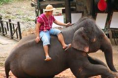 Выставка слона Стоковое Изображение RF