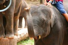 Выставка слона Стоковые Фотографии RF