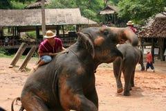 Выставка слона Стоковое фото RF