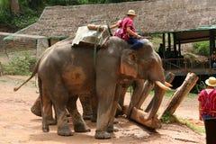 Выставка слона Стоковые Изображения RF