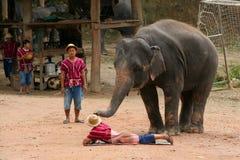 Выставка слона Стоковое Изображение