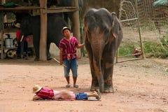 Выставка слона Стоковые Фото