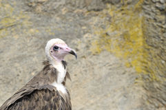 выставка хищника falconry 3 Стоковые Фотографии RF