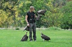 Выставка хищных птиц Стоковое фото RF