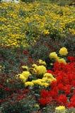 Выставка хризантемы Стоковые Фото