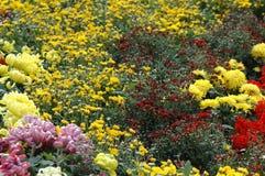 Выставка хризантемы Стоковые Фотографии RF