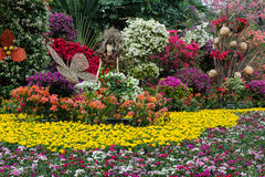 Выставка цветка бугинвилии стоковая фотография rf