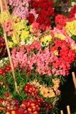 Выставка цветка Стоковое Изображение