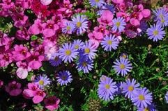 выставка цветков стоковое изображение