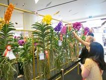 Выставка цветов в Таиланде Стоковые Изображения RF