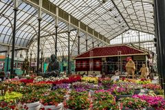 Выставка цветов январь 2019 Lalbagh - Ашрам Sabarmathi стоковое фото