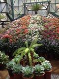 Выставка цветов Стоковые Изображения RF
