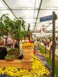 Выставка цветов 2017 RHS Челси ` S мира большинств престижная выставка цветов показывая самое лучшее в дизайне сада Стоковые Фотографии RF