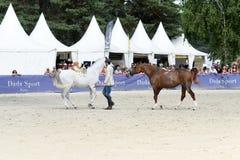 Выставка Dressage лошади Стоковое фото RF