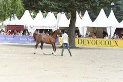 Выставка Dressage лошади Стоковое Изображение