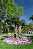 Выставка 2018 Euroflora Parchi di Nervi genoa Италия Стоковые Изображения