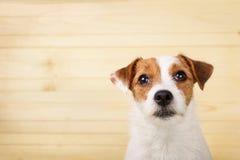 Выстрел в голову собаки Стоковая Фотография