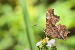 Выступая бабочка крюка кабеля Стоковая Фотография RF