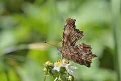 Выступая бабочка крюка кабеля Стоковое Изображение