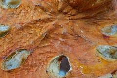 Высушенная айва Стоковые Фотографии RF