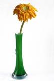 высушенная ваза gerbera Стоковое Изображение