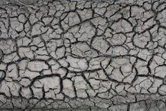 Высушенная грязь Стоковые Фото