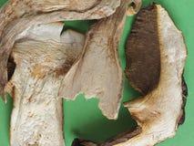 Высушенная еда гриба porcini Стоковое Изображение