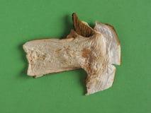 Высушенная еда гриба porcini Стоковая Фотография