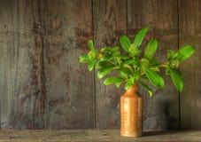 высушенная жизнь цветков ретро все еще вводит вазу в моду Стоковое фото RF