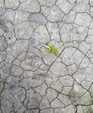 Высушенная и безжизненная земля с ростком сделала свой путь стоковая фотография rf