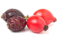Высушенная и свежая ягода розового бедра изолированная на белой предпосылке Стоковое Изображение RF