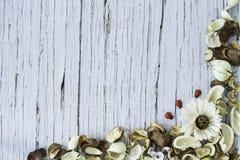 Высушенная конспектом рамка цветка на голубой старой деревянной предпосылке Стоковая Фотография