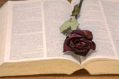 Высушенная красная роза на старой книге, винтажный тон стоковое фото rf