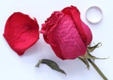 Высушенная красная роза на таблице, petai и кольце Стоковая Фотография