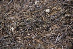 Высушенная морская водоросль на заливе Стоковые Изображения