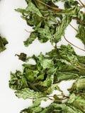 высушенная мята листьев Стоковое Фото