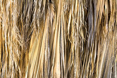 высушенная пальма листьев Стоковые Фото