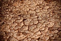 Высушенная почва с объектом отказов рыжеватым покрашенным - фото запаса стоковое фото rf