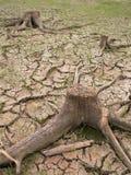 высушенная почва Стоковая Фотография