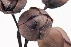 высушенная предпосылка цветет белизна лотоса Стоковое Изображение RF