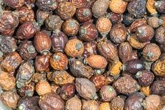 Высушенная предпосылка плодов шиповника естественная теплых цветов Стоковые Изображения