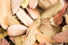 Высушенная предпосылка разрешения Естественная текстура на расплывчатом фокусе Стоковое Фото
