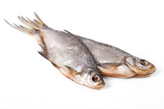 высушенная предпосылкой белизна рыб Стоковые Изображения